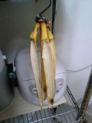 皮の一部だけ残ったバナナたち
