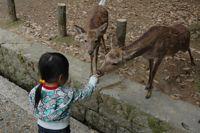 鹿にエサをやる花子