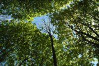 空が緑で覆われる程かなり木が多い